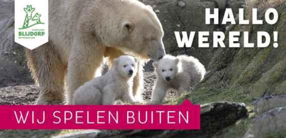 blijdorp-ijsbeer